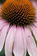 Flower at Elmwood Park.<br /> Photo by Chris Machian