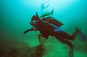B Diving July 1991