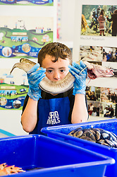 Pictured: Kieran Head (12) gets to grip with a ling<br /> <br /> The Seafood in Schools project, which aims to teach children about Scottish seafood, visited Craigroyston Community High School today where 260 children took part in workshops with the opportunity to view and handle fresh and live species, including crab and lobster.<br /> Ger Harley | EEm 7 June 2016