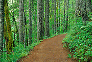 Image of the Eagle Creek Trail in the Columbia River Gorge, Oregon, Pacific Northwest by Randy Wells
