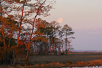 Moon over the marsh at Chincoteague National Wildlife Refuge, Virginia, USA