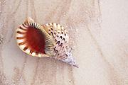 Seashell<br />