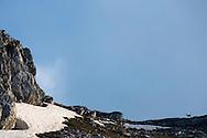 Apennine Chamois, Rupicapra pyrenaica ornata, in the Central Apennines rewilding area, Italy, in and around the Abruzzo, Lazio e Molise National Park.