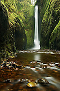 Lower Oneonta Falls drops a hundred feet into Oneonta Gorge, a tight mossy slit cut into the bedrock, in Oregon's waterfall-ridden Columbia Gorge.