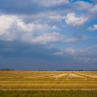 Wheat fields stretch to the horizon in southern Manitoba, Canada.