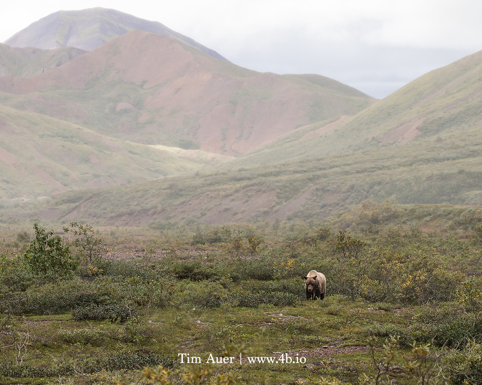 Aldo Leopold, through some of his writing, discusses ideas for why it matters the California Grizzly is gone. He promotes a nuanced thought process about appreciating your backyard.