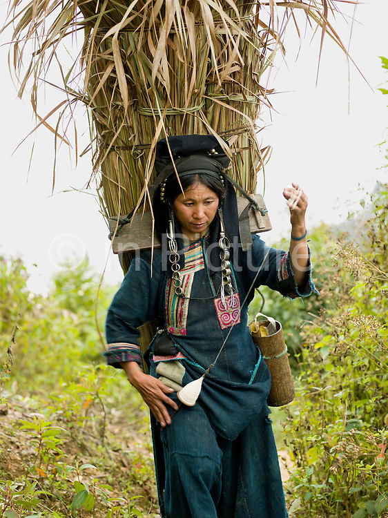 An Akha Nuquie ethnic minority woman, carrying grass in a bamboo basket for making a house roof, spins cotton whilst walking back to the village, Ban Chakhampa, Phongsaly province, Lao PDR. Akha women utilise every spare moment of the day to get something accomplished and can often be seen spinning cotton or embroidering a jacket everywhere from working on the farm to foraging in the forest.