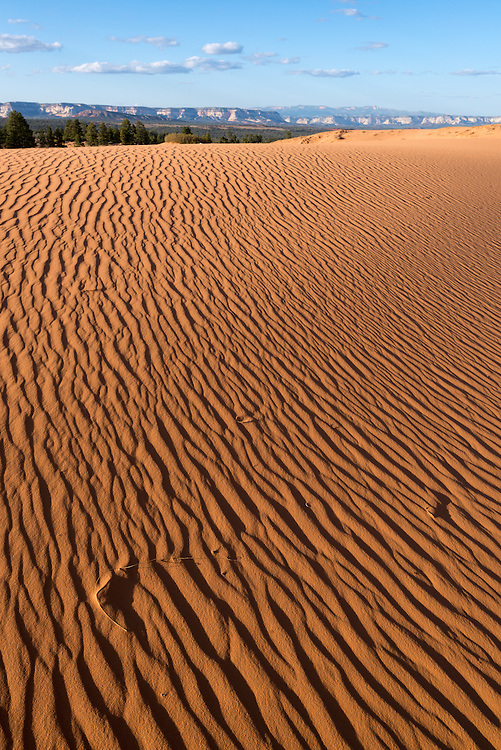 Patterns on sand dunes, Moquith Mountain Wilderness Study Area