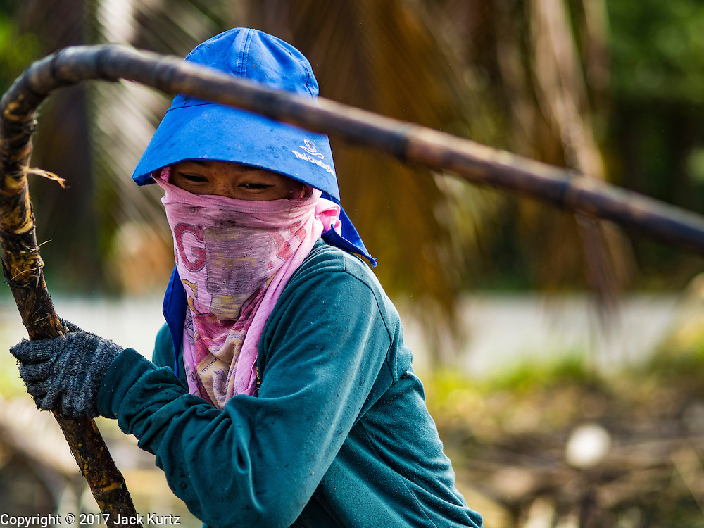 24 JANUARY 2017 - PHRA THAEN, KANCHANABURI, THAILAND: A sugarcane worker stacks cut sugarcane in a field in Phra Thaen. Thai government  officials recently announced that they plan to float sugar prices later this year or early in 2018. Wholesale prices are currently set by the Cane and Sugar Board, a part of the Industry Ministry, while the Commerce Ministry sets the retail price. Thailand has fixed retail prices of sugar to guarantee a profit for farmers. Thailand is the world's leading exporter of sugar, after Brazil. Thai sugar production is expected to drop by more than three percent because of the lingering drought that crippled agriculture through 2015 and 2016.    PHOTO BY JACK KURTZ