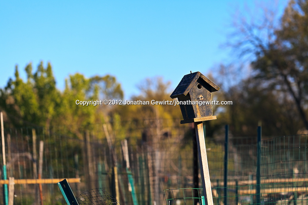 A wooden bird house in a community garden. WATERMARKS WILL NOT APPEAR ON PRINTS OR LICENSED IMAGES.