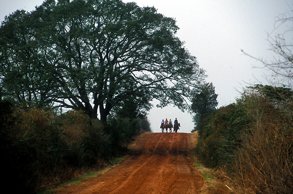 Trail riders making their way down the road