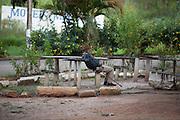 Muzambinho_MG, Brazil.<br /> <br /> Pedro Alves Batista sentado em uma praca em Muzambinho, Minas Gerais. A cidade e proxima BR 491.<br /> <br /> Pedro Alves Batista sitting in a plaza in Muzaffarnagar, Minas Gerais. The city is near to highway BR 491.<br /> <br /> Foto: LEO DRUMOND / NITRO