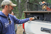 Brian Lynn of the Sportsmen's Alliance offers a sandwich to one of Angie Denny's (back) Walker hounds during an Idaho bear hunt.