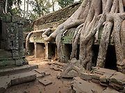 Tree roots grow over the ancient Ta Prohm temple at the Angkor temple complex, Siem Reap Province, Cambodia