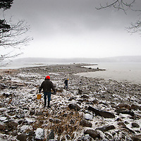 Local residents walk to Damariscotta, Maine River at mean low tide to harvest fresh river oysters during a winter snow.