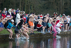 © Licensed to London News Pictures. 25/12/2017. Sutton Coldfield, Near Birmingham, UK. The traditional Christmas morning swim taking place at Blackroot Pool in Sutton Park earlier today. The free event attracts people who like to dress up in Christmas outfits and take the plunge into the open water, a different way to celebrate Christmas day. Pictured, at the stroke of 10am the dippers dive in. Photo credit: Dave Warren/LNP