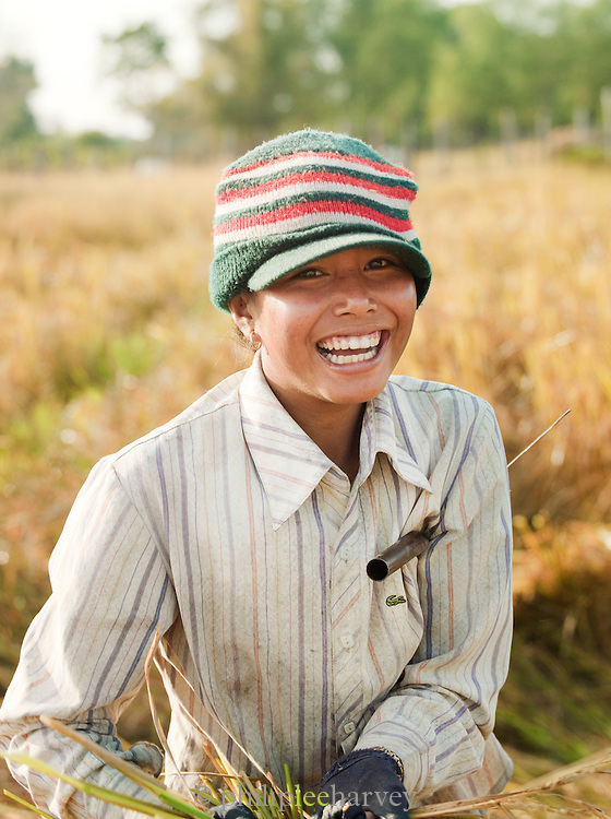 Worker harvests rice from the rice paddys in rural Cambodia. Members of the community help each other harvest their fields.