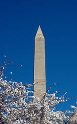 Washington, DC: Cherry Blossom Festival.  Cherry blossoms and Washington Monument.  Photo #: washch110 (nef487)..Photo copyright Lee Foster, www.fostertravel.com, 510-549-2202, lee@fostertravel.com