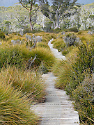 A boardwalk of the Overland Track cuts through Cradle Mountain-Lake St Clair National Park, Tasmania, Australia. The Tasmanian Wilderness was honored as a UNESCO World Heritage Site in 1982, expanded in 1989.