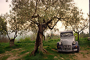 A grey 2 CV citroen car parked on bare earth under an olive tree, 27th August 2006, Lagrasse, France.