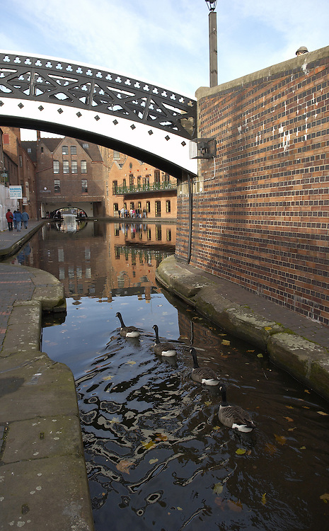Four wild geese paddling in the Worcester and Birmingham Canal in Broad Street, central Birmingham, Midlands, UK<br />