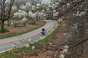The dogwoods were blooming along the roads in far southwest Missouri during our trip.