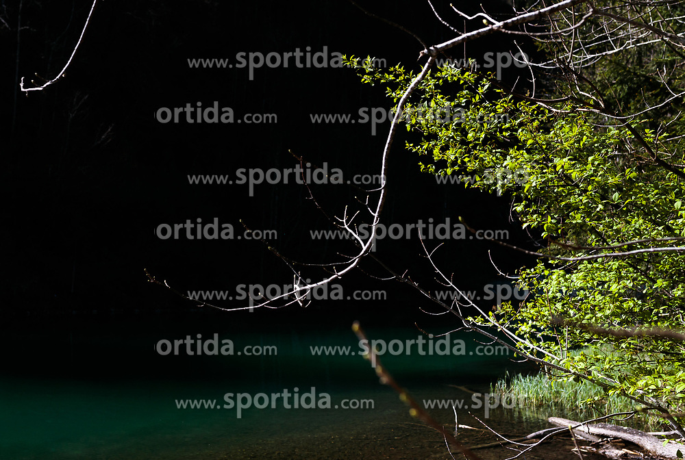 THEMENBILD - Äste mit grüne Blätter, aufgenommen am 24. April 2017, Klammsee, Kaprun Österreich // Branches with green leaves at the Klammsee, Kaprun Austria on 2017/04/24. EXPA Pictures © 2017, PhotoCredit: EXPA/ JFK
