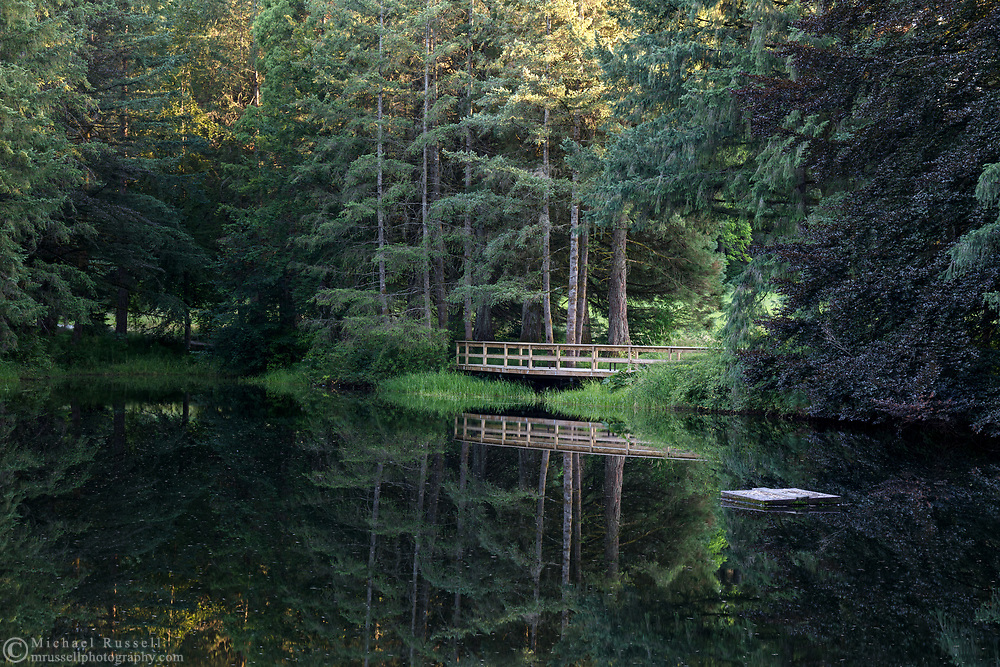 Evening reflections on the pond at Godwin Farm Biodiversity Preserve in Surrey, British Columbia, Canada