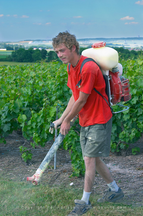 The son of Francois Seconde carrying a sulphur spraying machine (sulphur is the yellow powder) on his back to treat spray the vines to protect them from maladies diseases in the vineyard Champagne Francois Seconde, Sillery Grand Cru, Montagne de Reims, Champagne, Marne, Ardennes, France