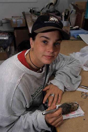 Collared Lemming (Dicrostonyx groenlandicus) Anne Paulson disects dynamics study. Barrow, Alaska.