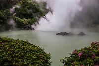 """Shiraike Jigoku - white pond hell shows a boiling pond of white milky water surrounded by garden. It's extra attraction is a battered aquarium with piranhas.  The hells or jigoku of Beppu are made up of hot springs for viewing rather than bathing in.  Visitors may not touch the boiling water as it would be rather dangerous as temperatures can go up beyond 60C.  Most of the hells are presented to visitors in a touristy fashion, that is """"extra"""" attractions such as piranhas and crocodiles."""