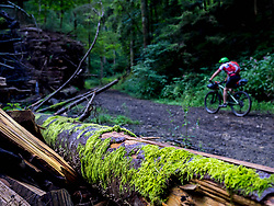 Close - up of mossy tree trunk with mountain biker speeding in the background