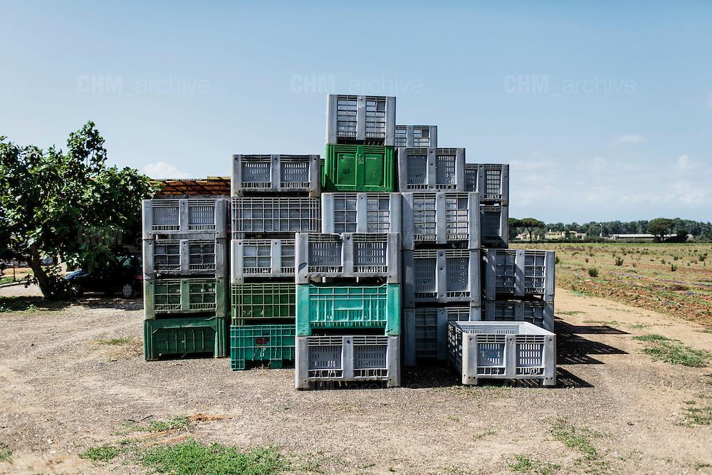 Campagna agricola nei pressi di Sabaudia (Latina), Giugno 2014.  Christian Mantuano / OneShot