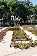 Rose garden, Parque Del Oeste, Madrid, Spain