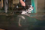 Doggie Rehab