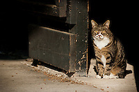 A calico cat sits ready to do some mousing in a horse stable.