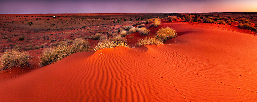Tracks across sand dune at dusk, panorama, Old Andado Station, Simpson desert, Northern Territory, Central Australia.