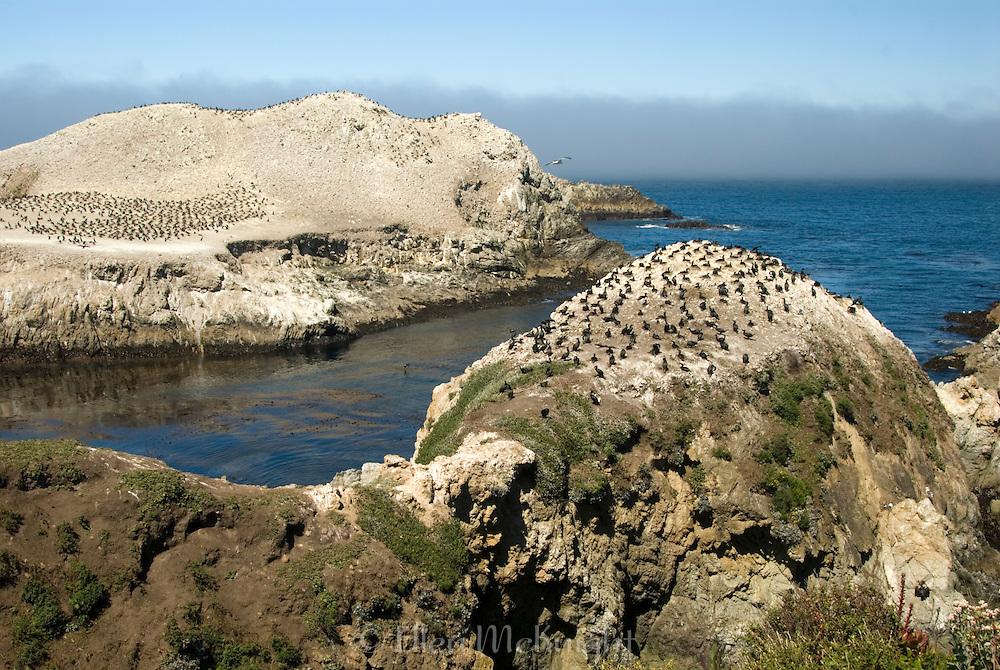 Point Lobos, California