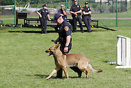 Middletown, NY - A police dog walks next to a police officer during a demonstration at the YMCA on June 1, 2008.
