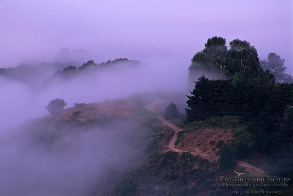 Dawn light and fog in the Berkeley Hills, Alameda County, CALIFORNIA