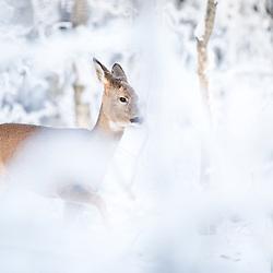 Sweden, nature