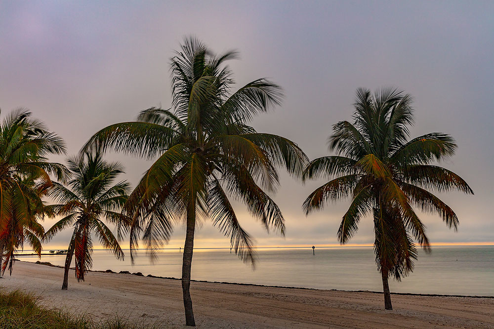Palm trees silhouetted by sunrise at Smathers Beach in Key West, Florida, USA