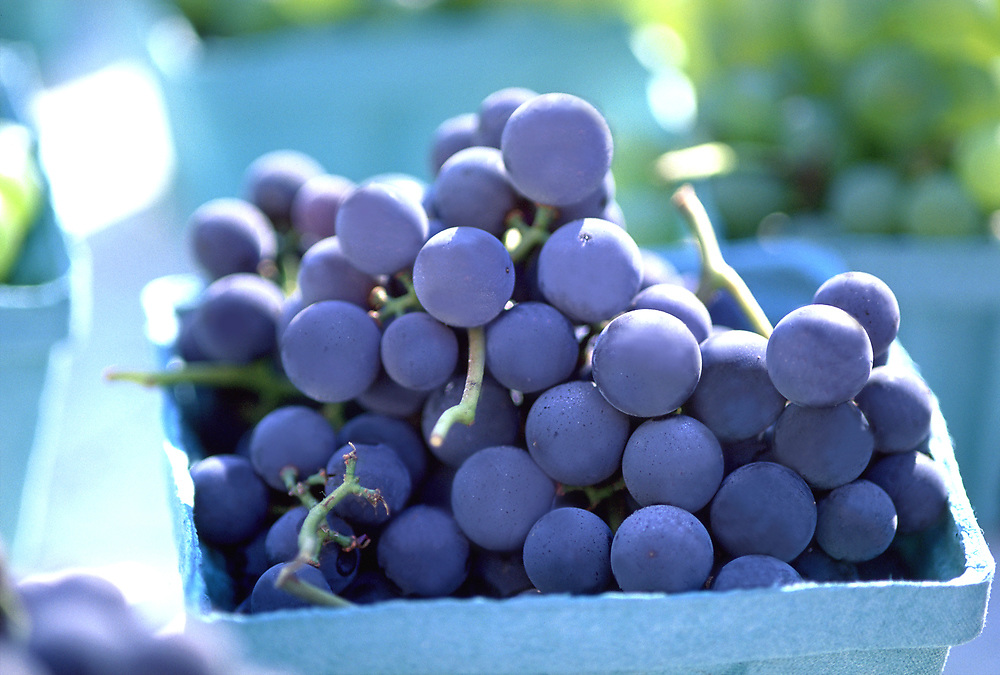Close up selective focus photograph of containers of Concord Grapes