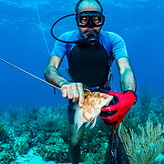 Commercial fisherman Andres Maldonado takes a hogfish off his spear near Cabo Rojo, Puerto Rico. He noticed drastic and obvious declines in fish numbers and habitat availbale after Hurricane Maria in 2017 which put many other commercial fisherman out of business. Image release available.