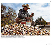 """""""La crisis entre México y Estados Unidos, ¿una nueva oportunidad para el maíz mexicano?"""", The New York Times, Mexico, Marzo 1, 2017. Fotos por Rodrigo Cruz."""