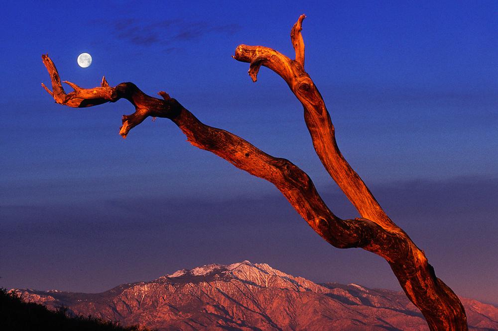 Mount San Jacinto from Keys View, moonset, Easter morning light, Joshua Tree National Park, California, USA