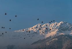 THEMENBILD - ein Vogelschwarm über der Stadt mit der Nordkette, aufgenommen am 23. Feber 2018 in Innsbruck, Österreich // a flock of birds over the city with the Nordkette Mountains, Innsbruck, Austria on 2018/02/23. EXPA Pictures © 2018, PhotoCredit: EXPA/ JFK