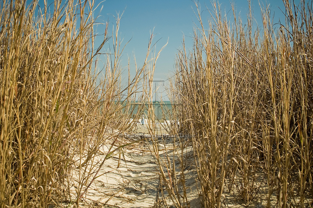 A short path winds through the dried sea oats to the surf in Myrtle Beach, South Carolina