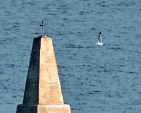 Herring Gull (Larus argentatus). Viewed from the deck of the MV Explorer, Stockholm Archipelago. Stockholm, Sweden. Image taken with a Nikon N1V2 camera and 80-400 mm VR lens.