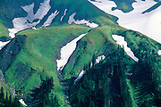 Snow & Meadows - Mt. Baker N.F., Washington